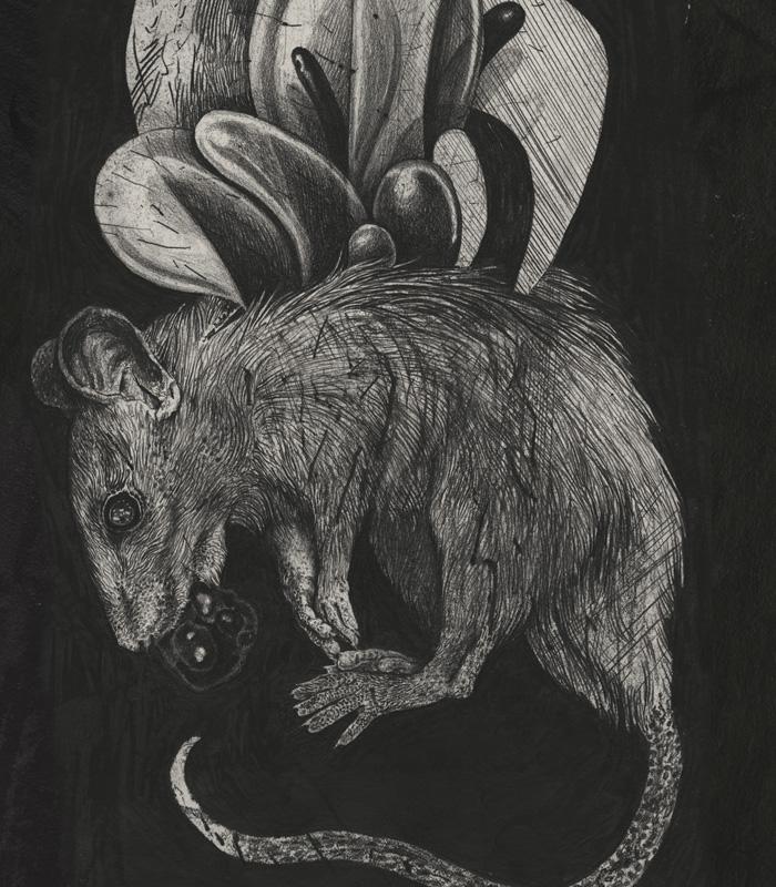 rat soul